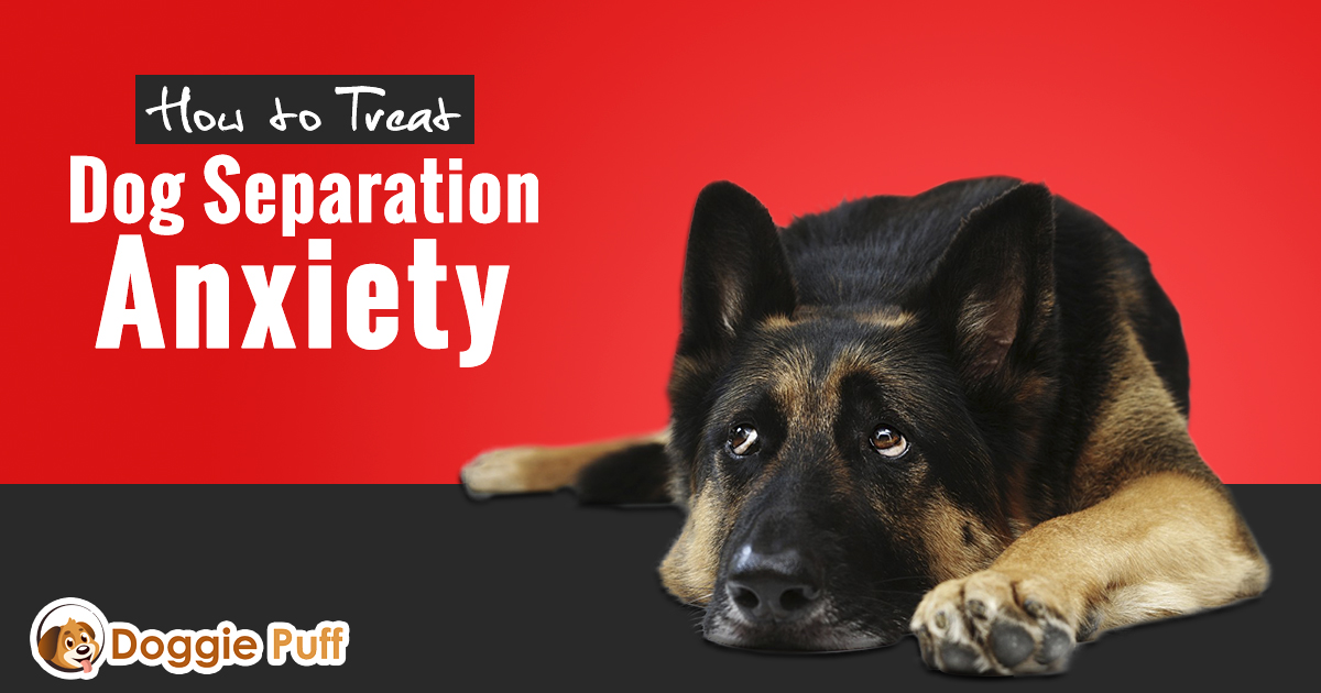 How to Treat Dog Separation Anxiety