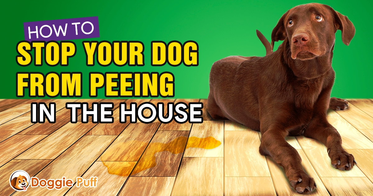 Dog peeing in house 2