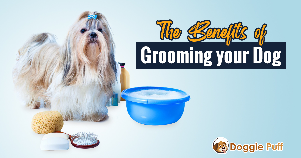 Dog grooming benefits