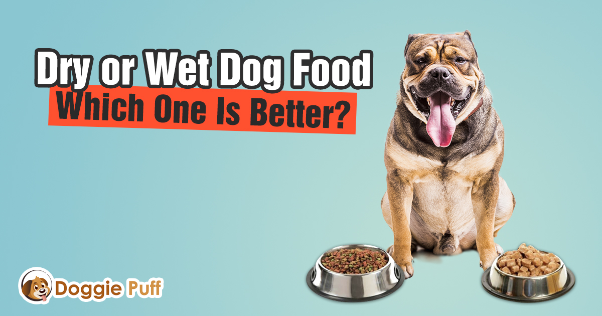 Dry or Wet Dog Food Which One Is Better
